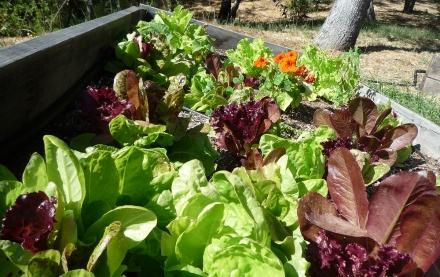 自家製菜園