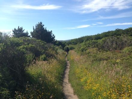 後半は山側。熱いぐらいの日差しだったのですが、風がありハイキングには最高の日でした